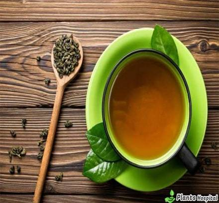 a senna tea fogyás előnyei)