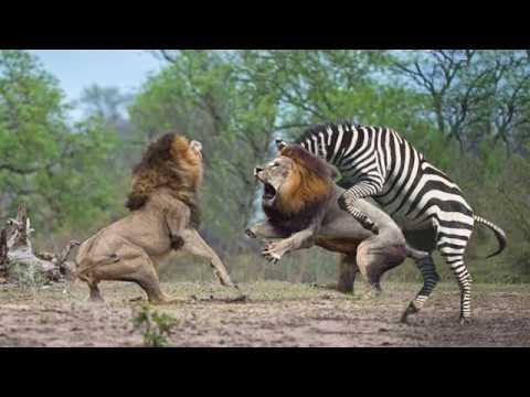 Fogyás oroszlán. Jógapózok fogyáshoz: eltűnik a hájréteg a combról, hasról, hátról