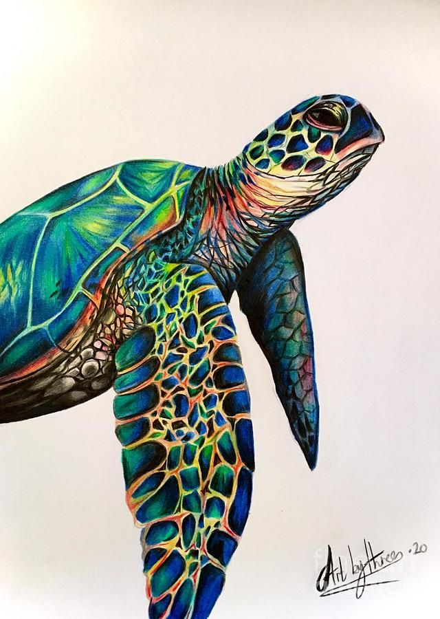 a teknősök fogyhatnak-e