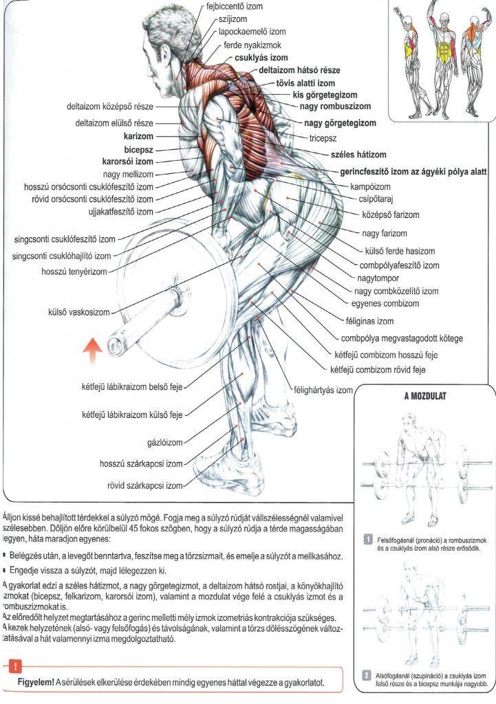 Mit nyersz a teljes testes edzésekkel? - A legjobb osztott rutin a fogyáshoz