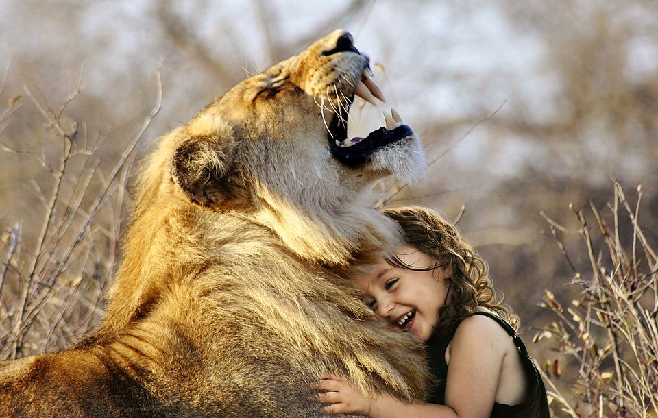 fogyás oroszlán)