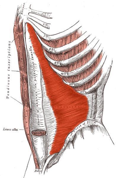 gyors módja a hát alsó részének zsírvesztésének)