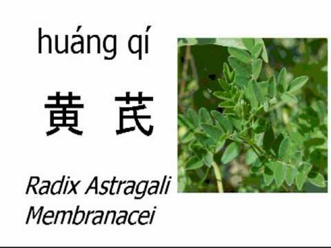 Astragalus előnyei a fogyáshoz