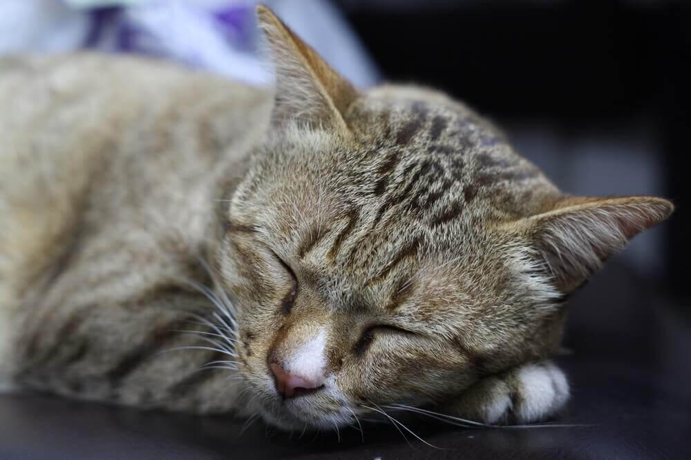macska fogyás