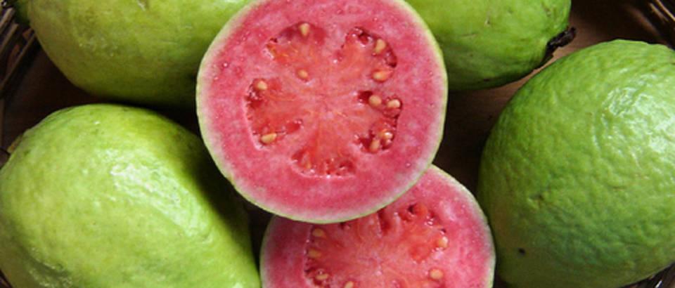 guava levelek a fogyás mellékhatásaiért