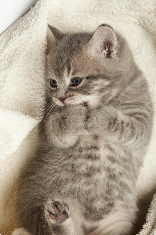 macska gyulladásos bélbetegség fogyás