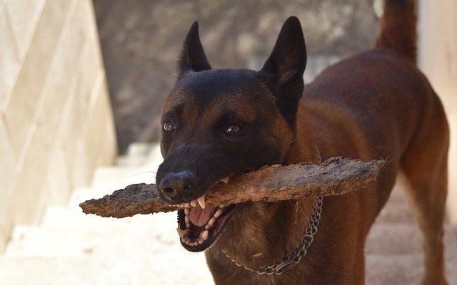 megmagyarázhatatlan fogyás a labradorokban