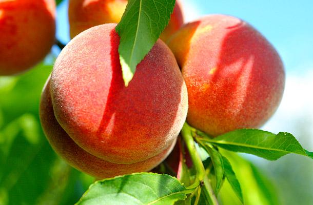 14 gyümölcs a gyors és biztos fogyáshoz