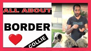 border collie-nak le kell fogynia)